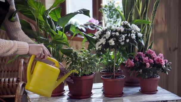 Mladá žena zalévání květiny uvnitř domu