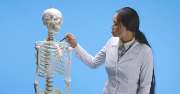 Doctor explaining anatomy with skeleton