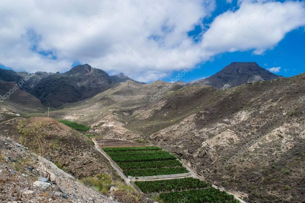 Banana plantation in the mountains, blue sky, Tenerife, Spain