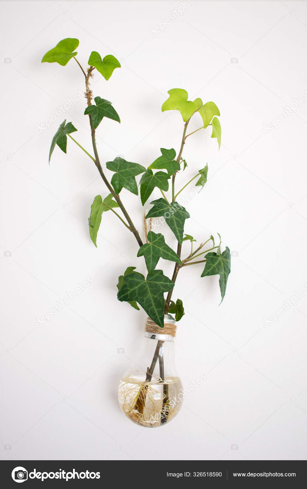 Green Plant Hanging Wall Glass Vase Clear Climbing Wall Flower Stock Photo C Ollyplu 326518590