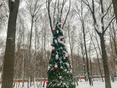 Elegant Christmas tree in the Park.