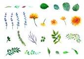 virágos szett. Gyűjtemény levelekkel. Tavaszi vagy nyári design-meghívó, esküvői vagy üdvözlőlapok.