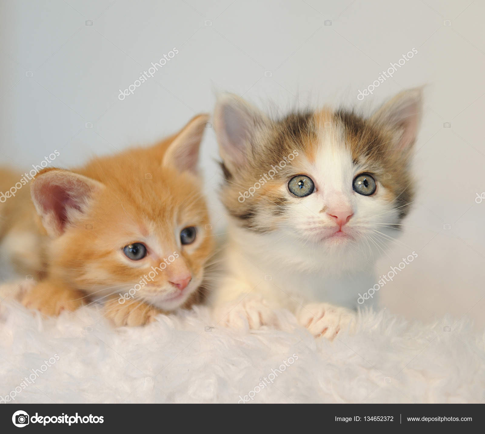 Two little kittens peeking out of a white fluffy chair — Stock