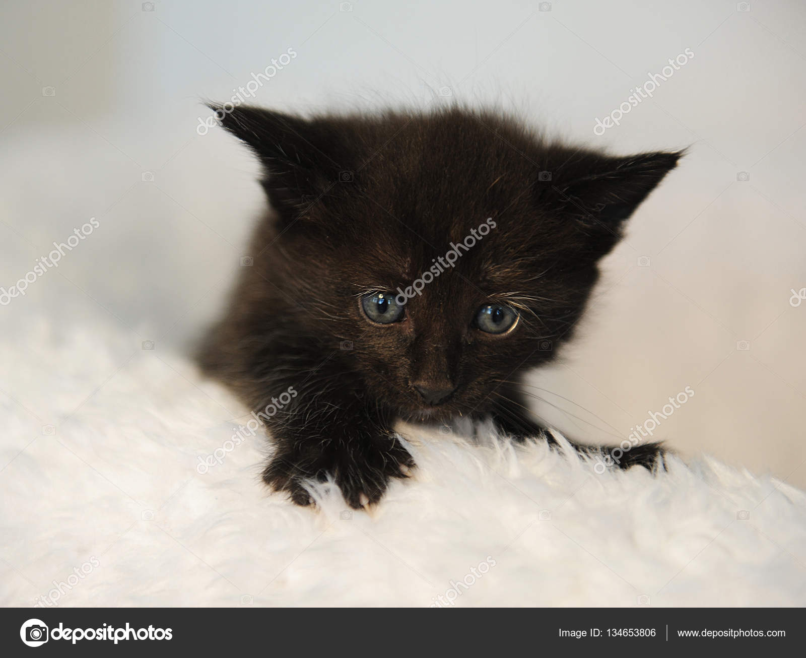 black kitten peeking out of a white fluffy chair Christmas mood