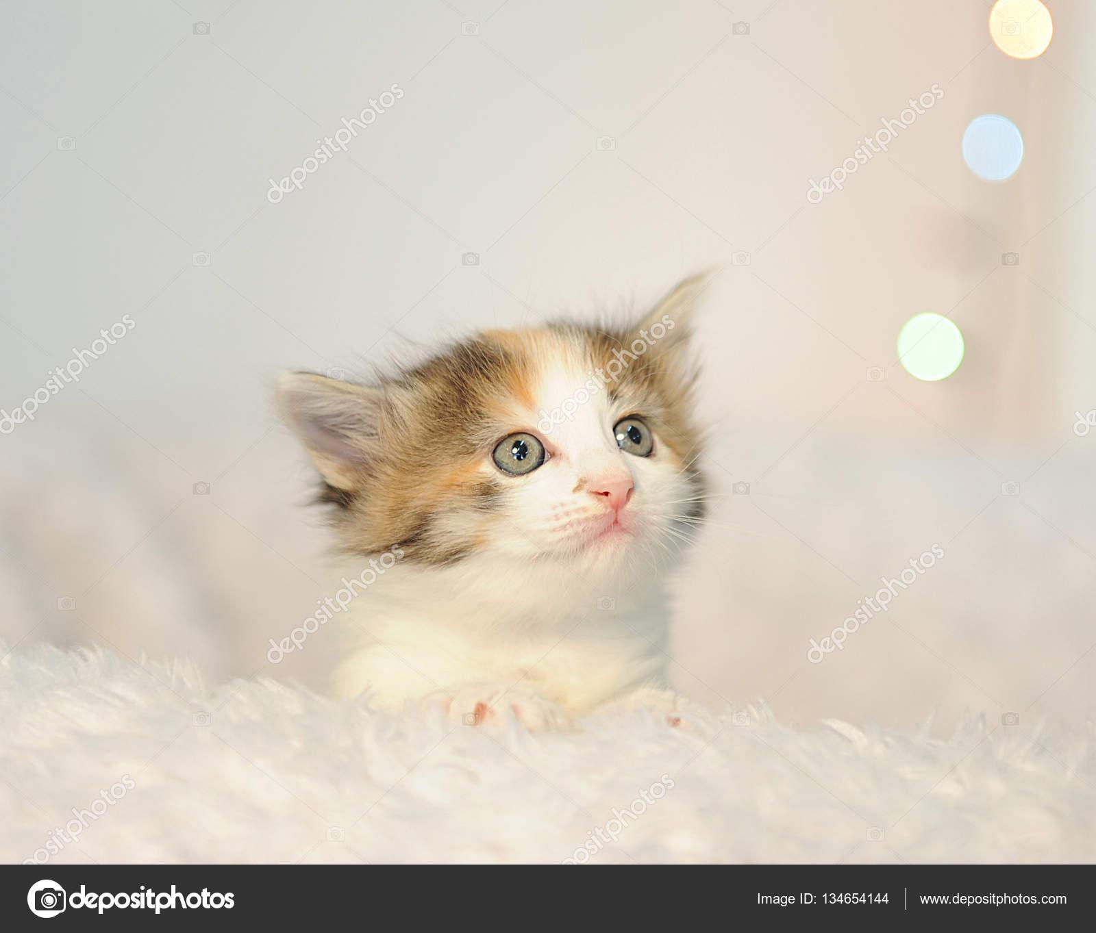 Little cute kitten peeking out of a white fluffy chair Christmas