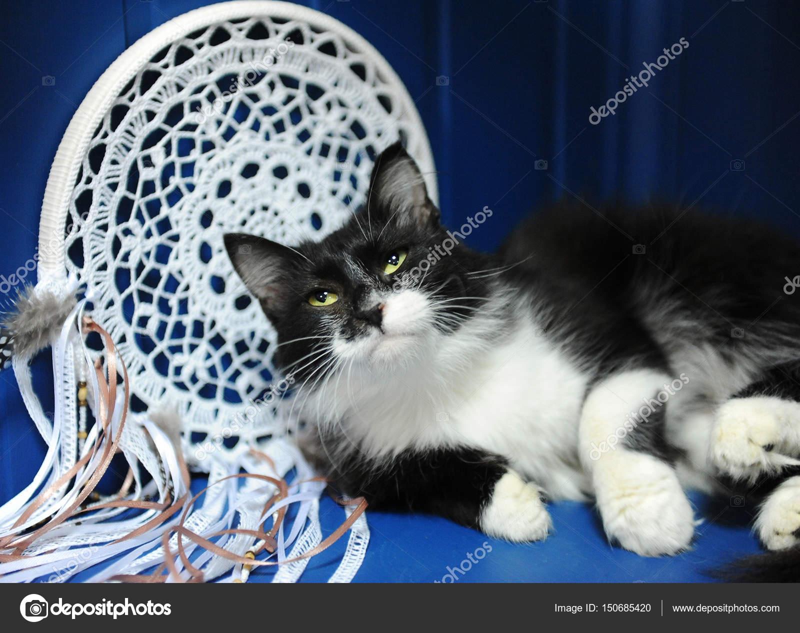 stáhnout černou chlupatou kočičku