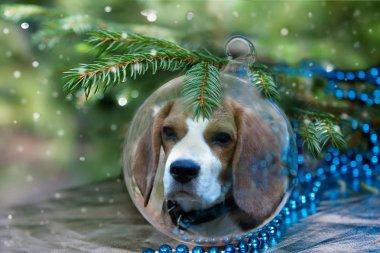 Christmas ball with beagle dog under christmas tree.