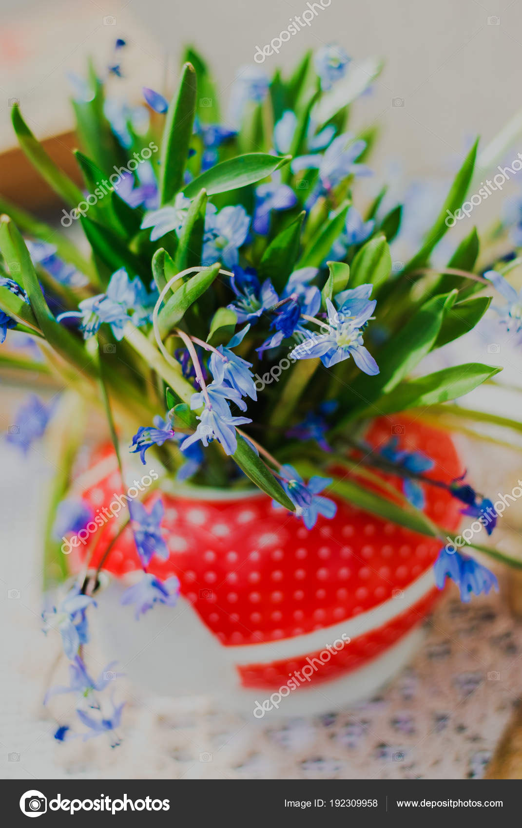 Beautiful Early Spring Flowersscilla Siberica In Red Teapot On