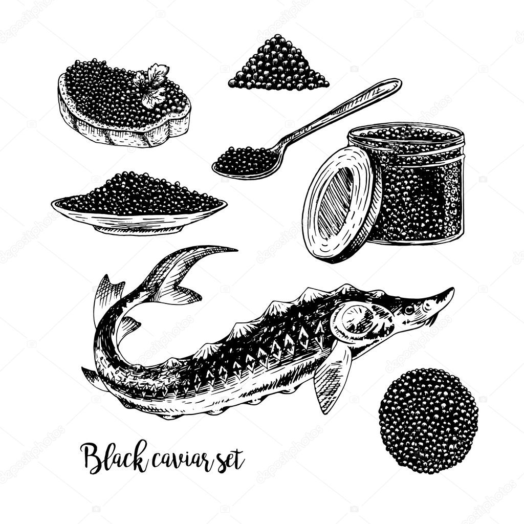 hand drawn set of black caviar stock vector airin dizain 127634348  retro sketches isolated vintage hypster collection doodle line graphic design black and white drawing fish sturgeon jar spoon plate sandwich