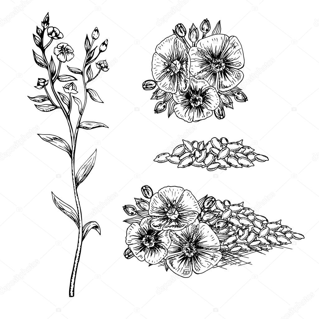 Hand drawn flax flowers and seeds. — Stock Vector © airin.dizain ...