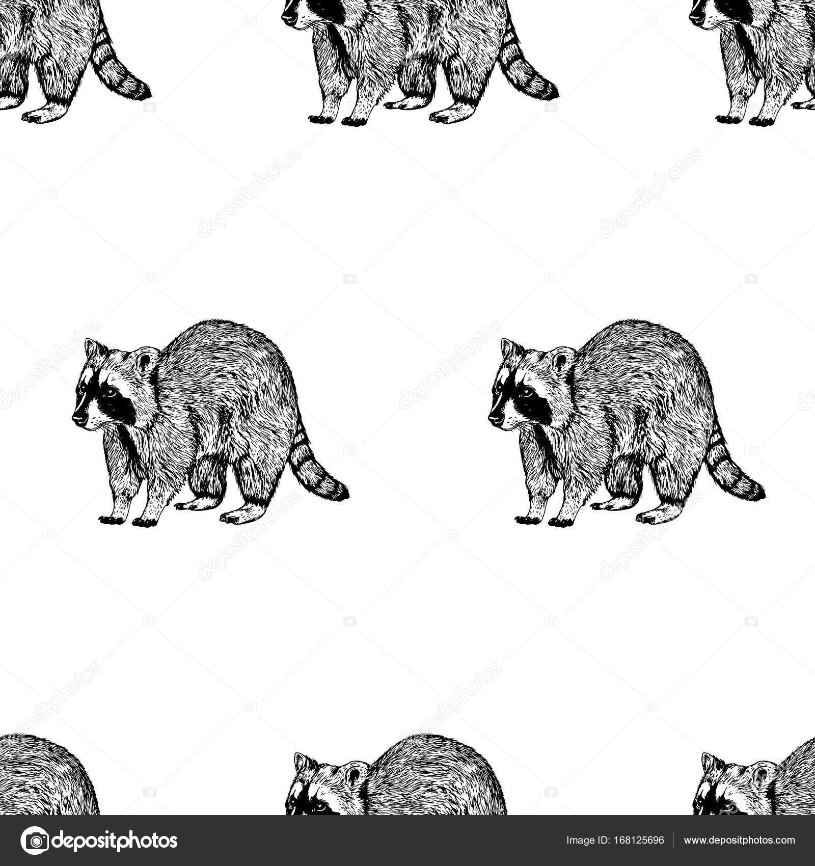 Mano dibujada de fondo con mapache. Patrón transparente de vector ...