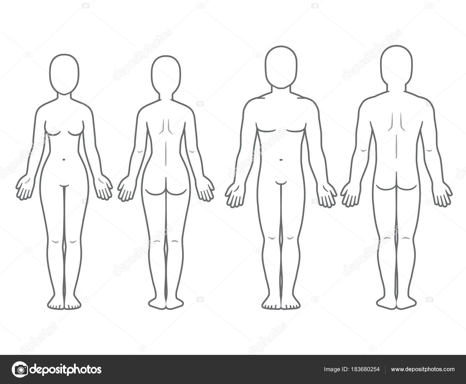 Male And Female Body Front Back View Blank Human Template For Medical Infographic Isolated Vector Illustration By Sudowoodo