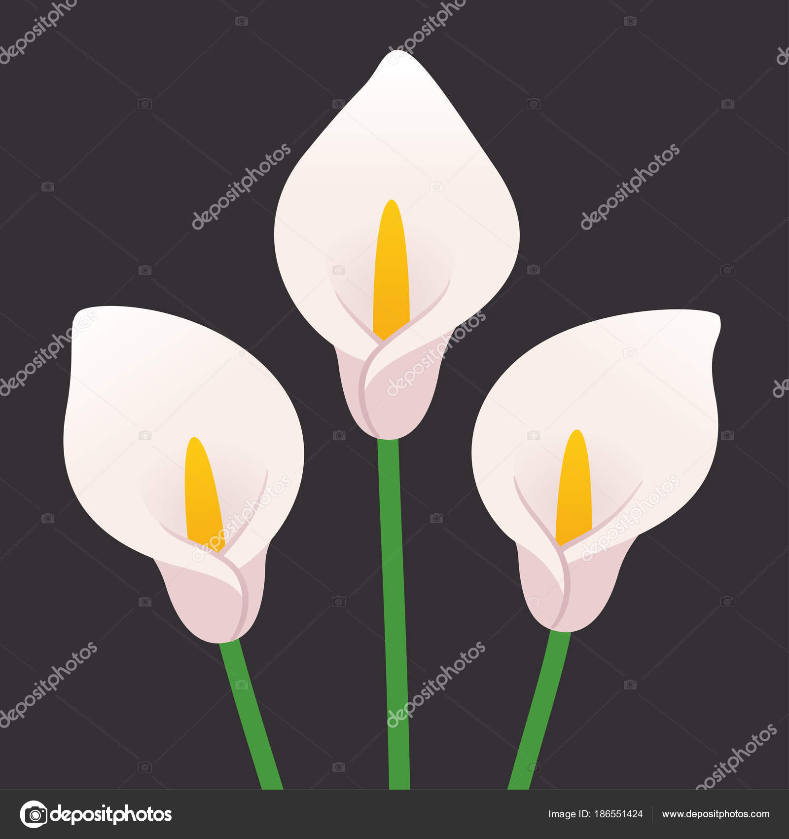Calla lily flowers stock vector sudowoodo 186551424 calla lily flowers stock vector izmirmasajfo