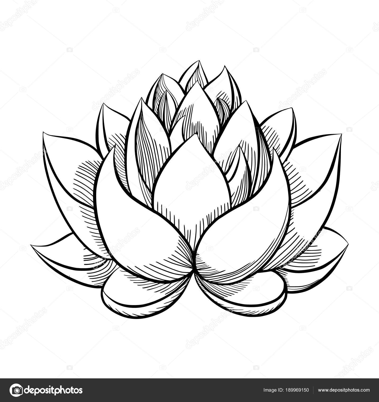 Lotus Flower Bloom Stock Vector Gennadiikorchuganov 189969150