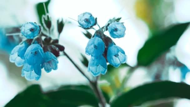 blue flowers 4K