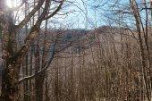 krásný jarní Les pro přírodní pozadí