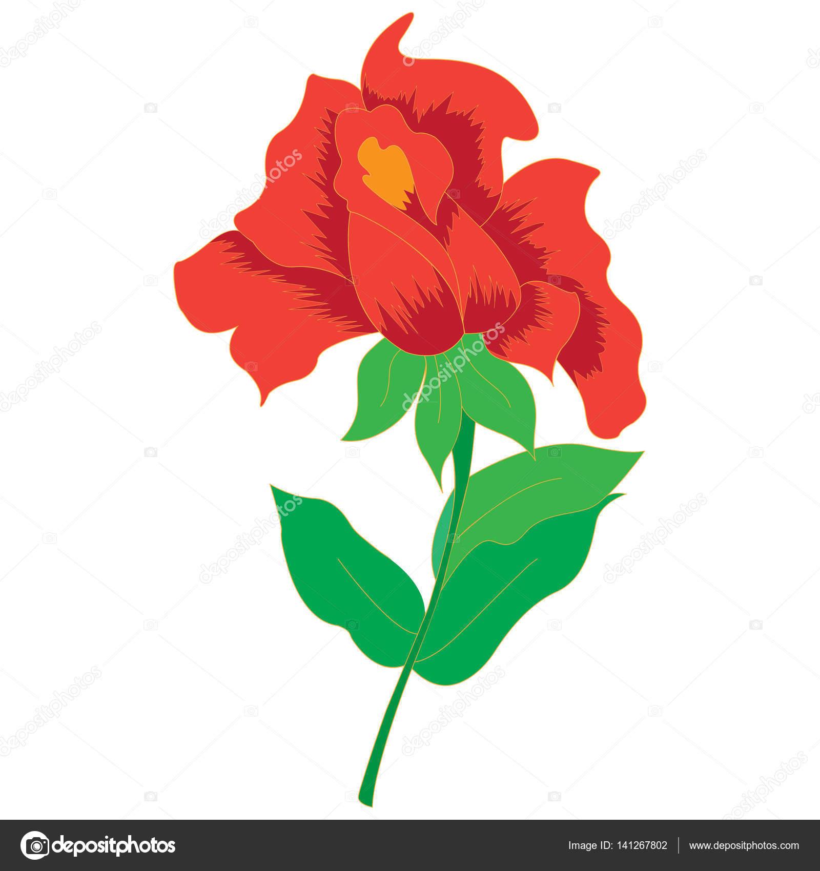 Vector de la imagen de una hermosa rosa roja — Vector de stock ...