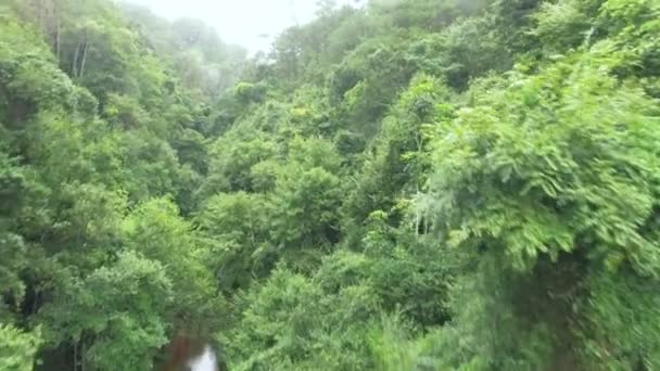 Luftaufnahme Dschungel in Südvietnam