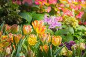 Tulipán. Szép tulipán csokor. színes tulipán.