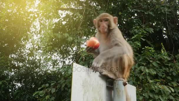 Opice sedící na dopravní značky a jíst jablko