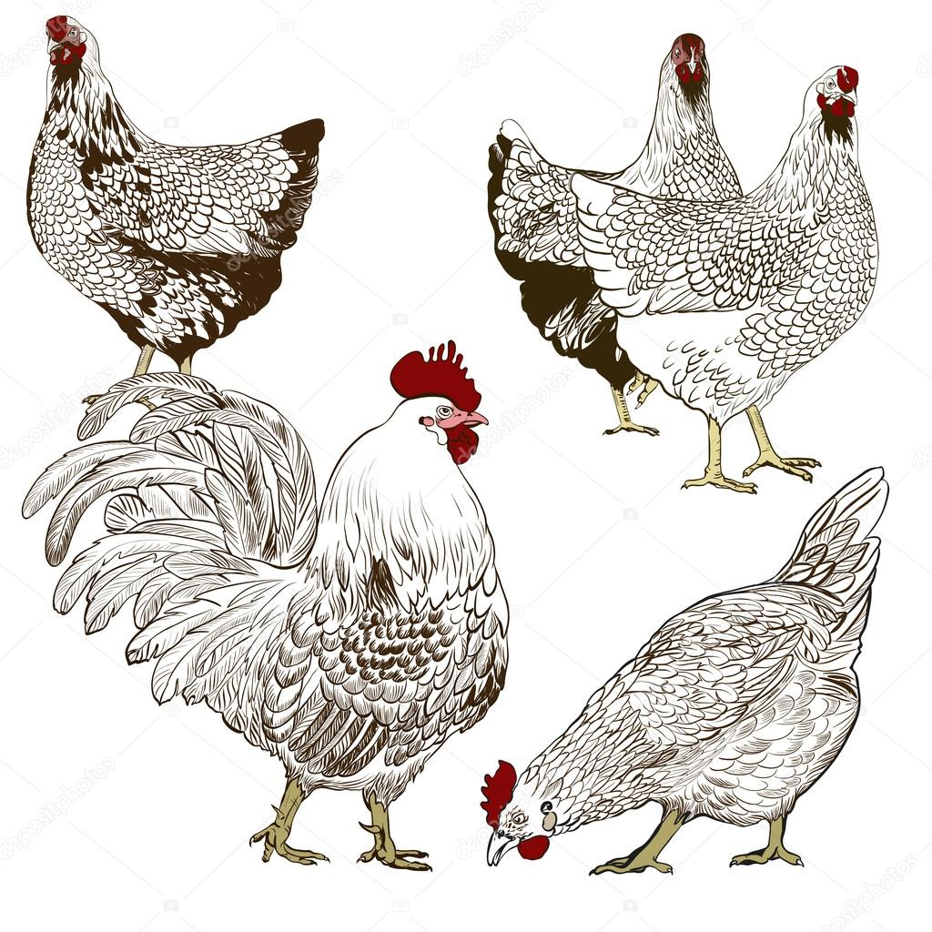 Decorative vector image of a rooster  and a hens. Brown pattern on a white background.