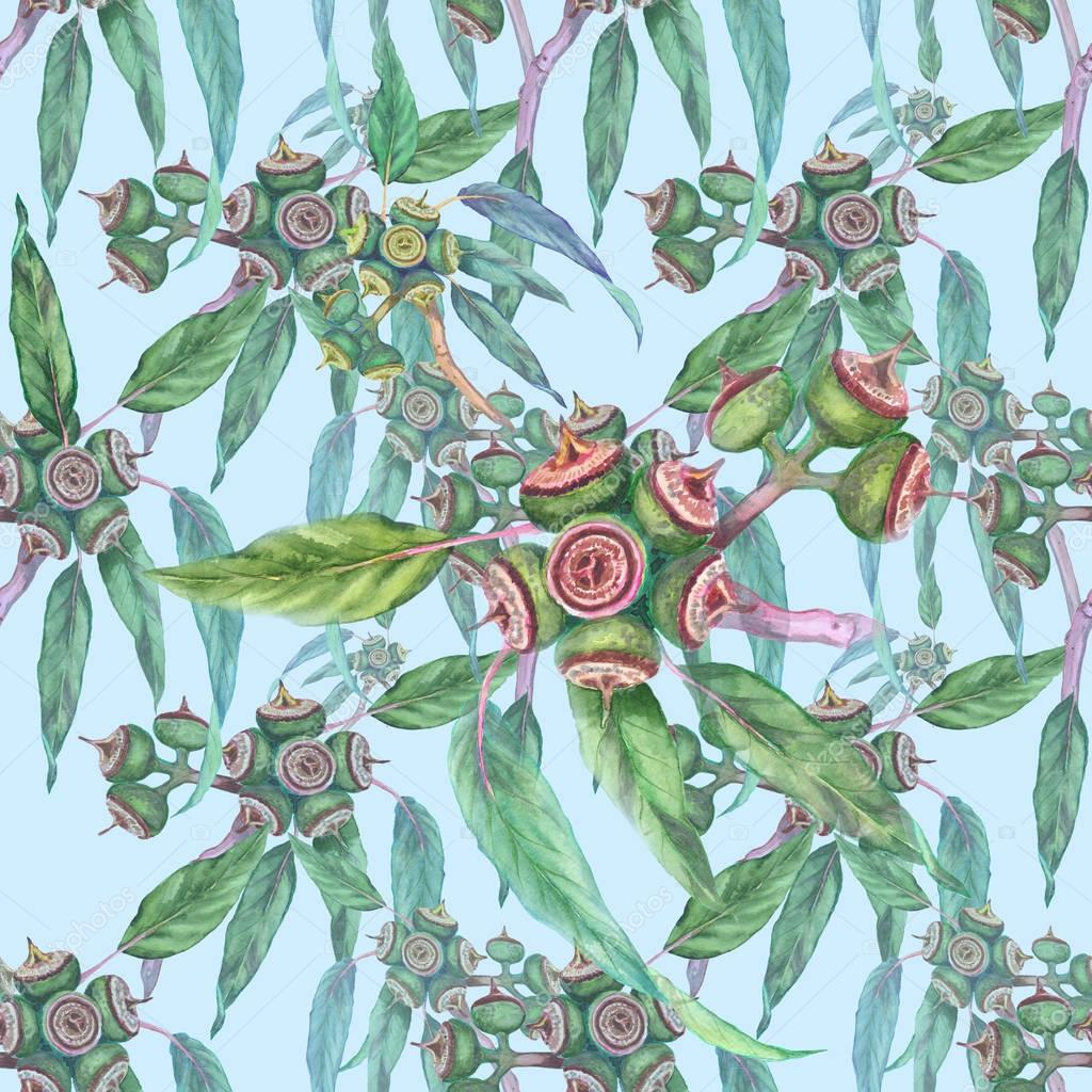 Leaves and fruits of eucalyptus. Seamless pattern.
