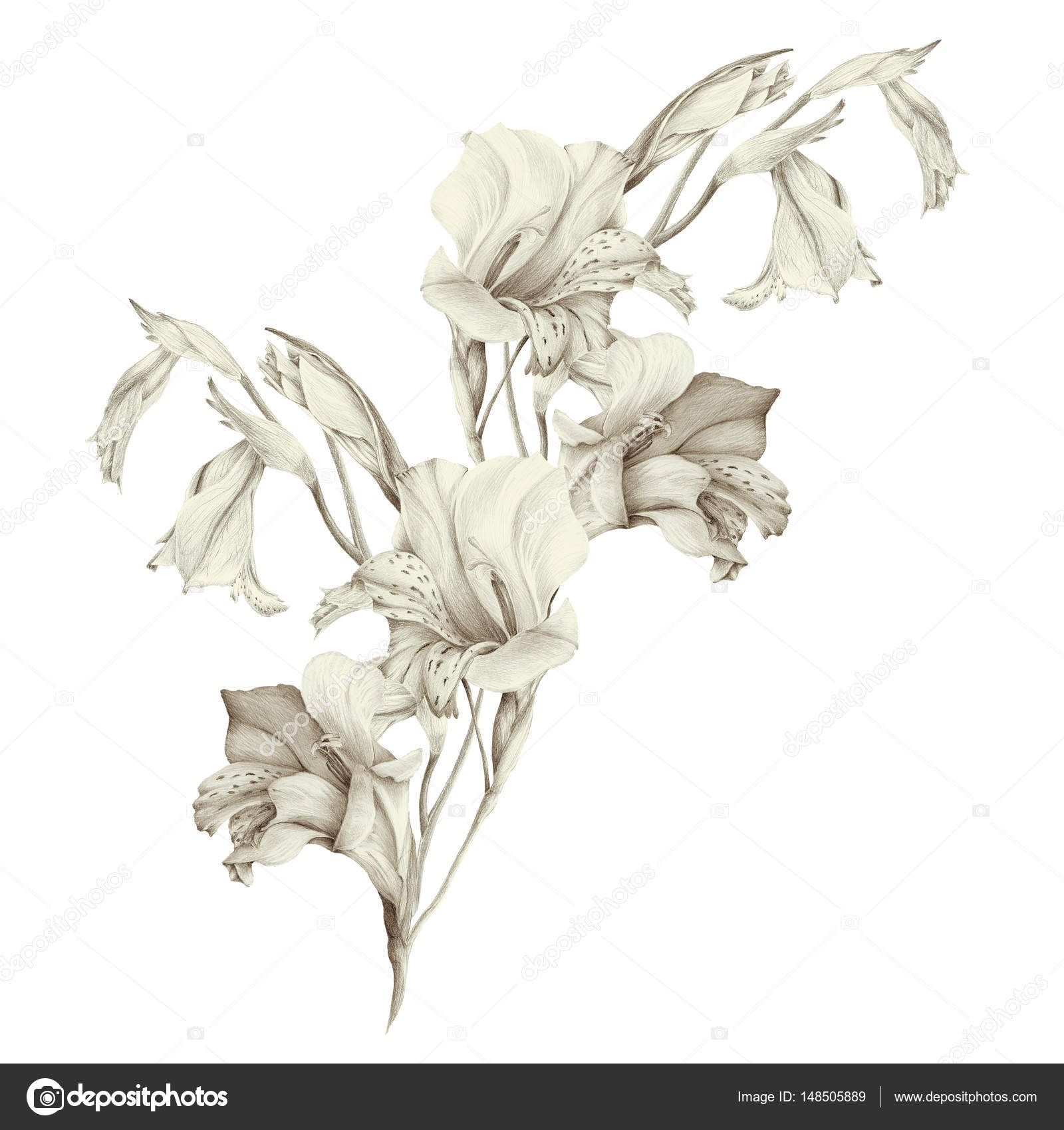 Gladiolus Abstract Wallpaper With Floral Motifs Wallpaper Stock