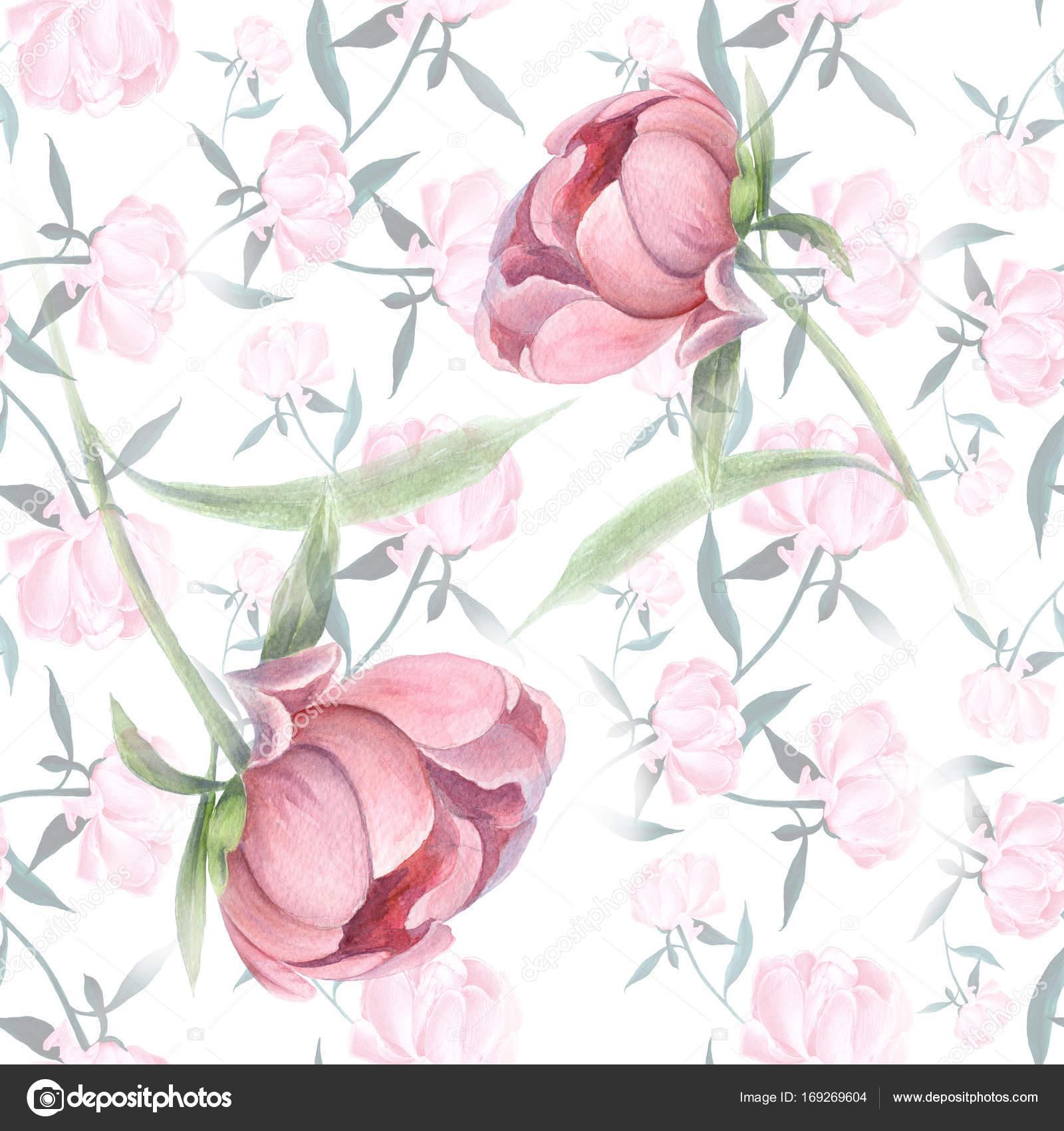 Piwonie Kwiatów I Liści Dekoracyjnych Kompozycji Na Tle