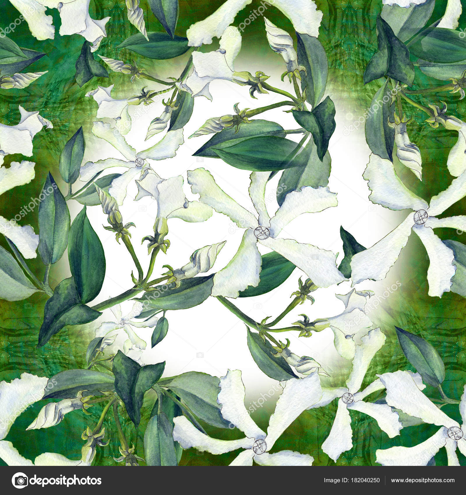 Jasmine Flower Buds Images Flowers Healthy