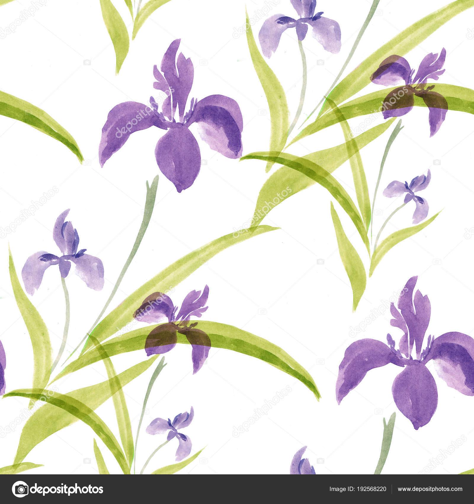 Flowers of irises watercolor on a white background seamless flowers of irises watercolor on a white background seamless pattern watercolor painting wallpaper izmirmasajfo