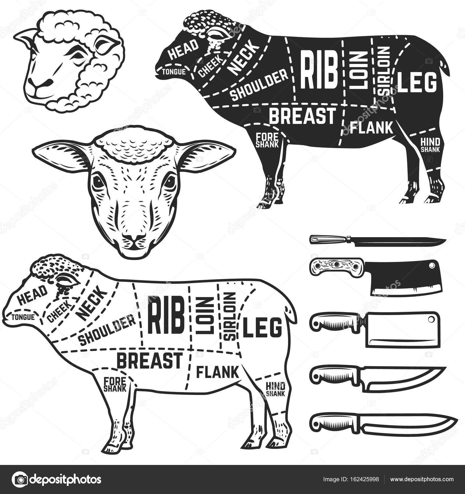 Lamb Cuts Butcher Diagram Design Element For Poster Menu Vect Deer Stock Vector