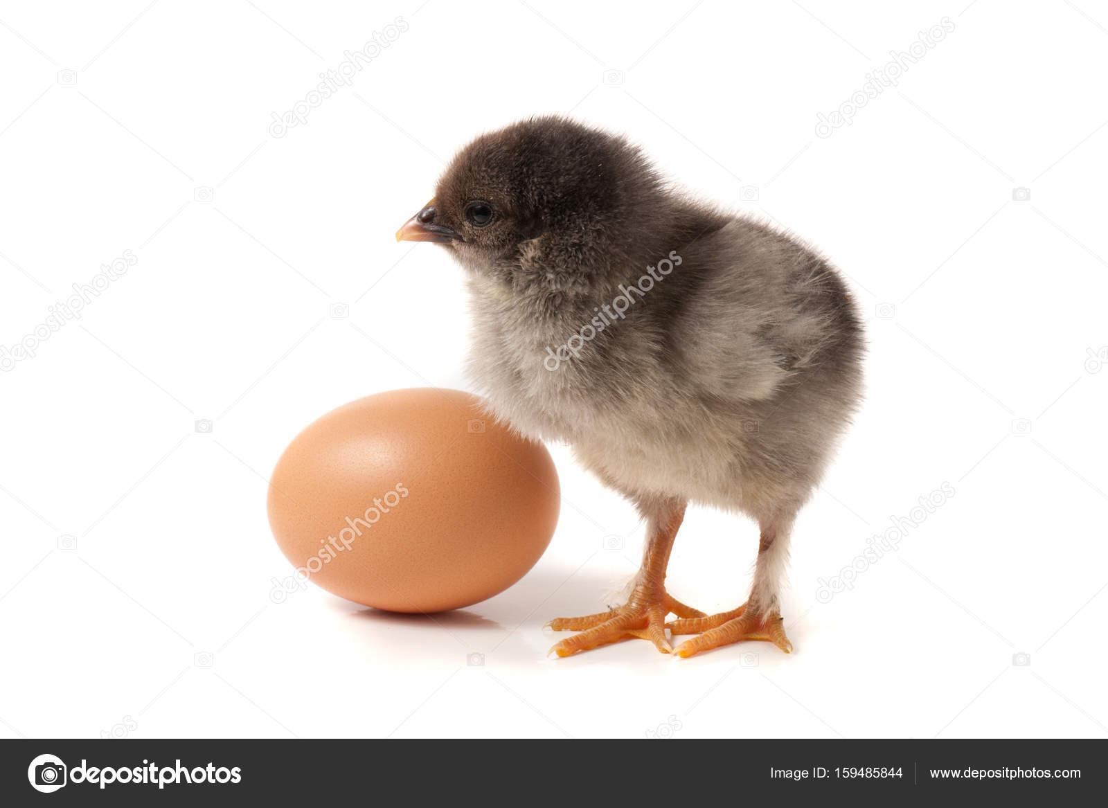 unga håriga kycklingar Ebony porr bild