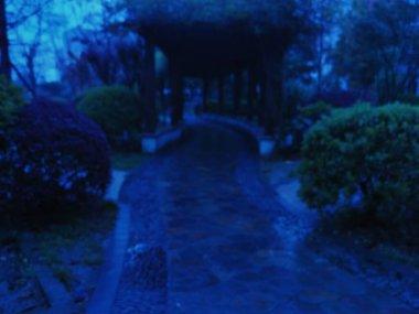 "Картина, постер, плакат, фотообои ""размытый фон ночного леса страны"", артикул 484519932"
