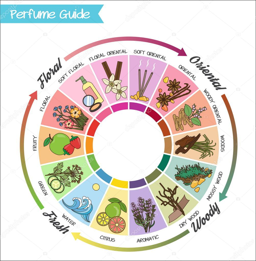 Perfume guide wheel infographic.