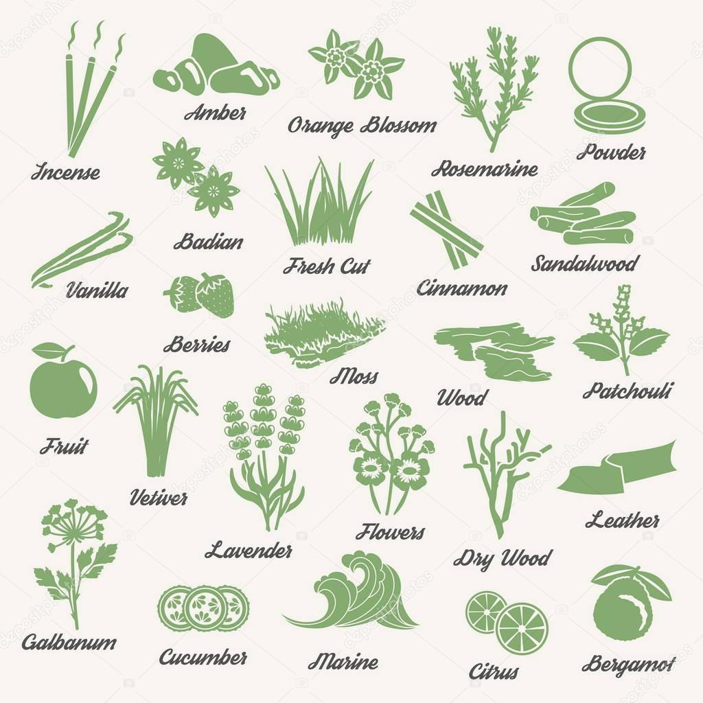 One color aromatic herbs and plants icons
