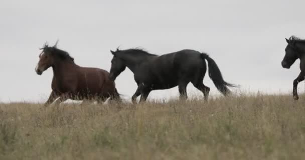 Wild brown horses on the field running gallop