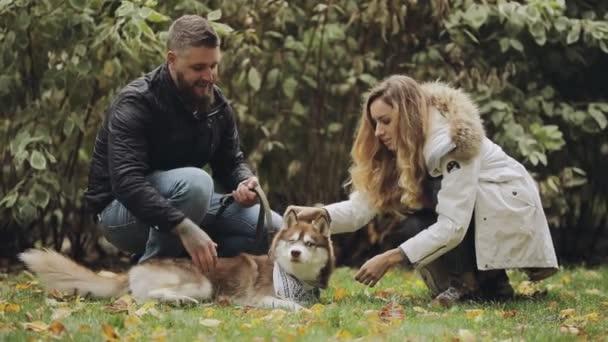 Muž a žena pohladit psa husky ležící na trávě v parku na podzimní den, pomalý pohyb