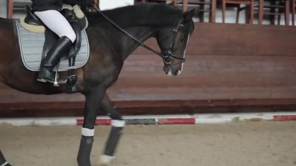 Professional horsewoman riding horse in a manege, running gallop