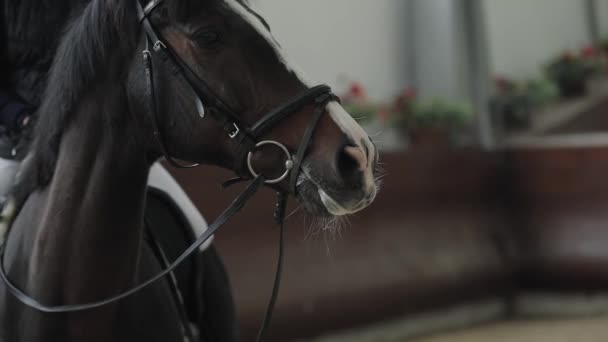 Fáradt ló után fut, pára a hideg manege légzés