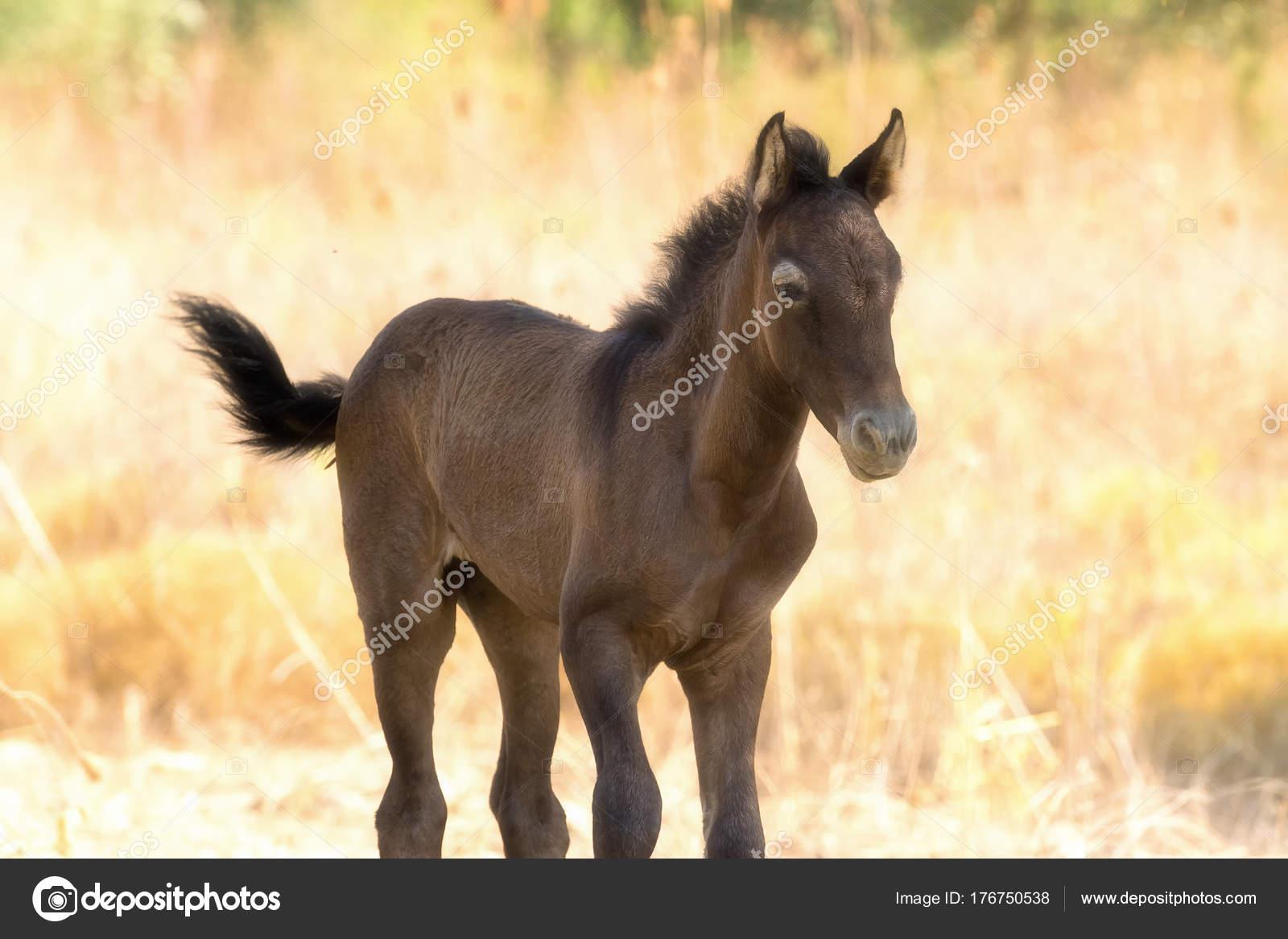 Brown Baby Horse Brown Baby Horse Portrait Close Motion Stock Photo C Bilisanas 176750538
