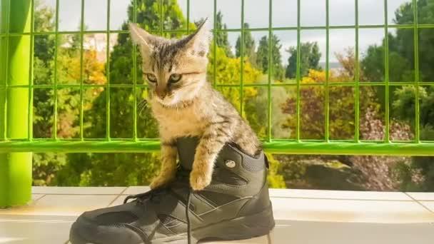 Vicces kis kitty cipő belsejében