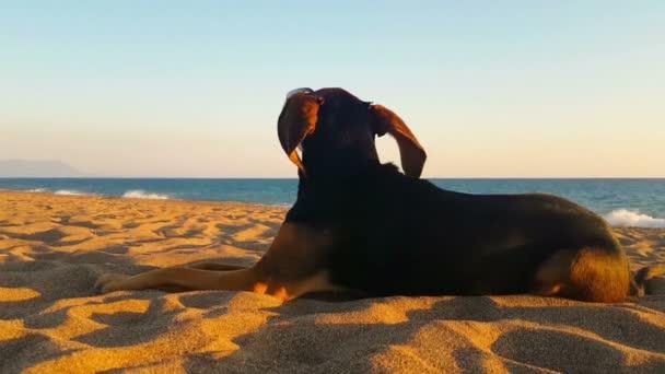 Legrační šťastný portrét psa na pláži nosí sluneční brýle.