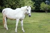 Koně na přírodu. Portrét koně