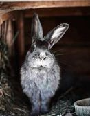 Photo Rabbit in a cage. Rabbit in the countryside