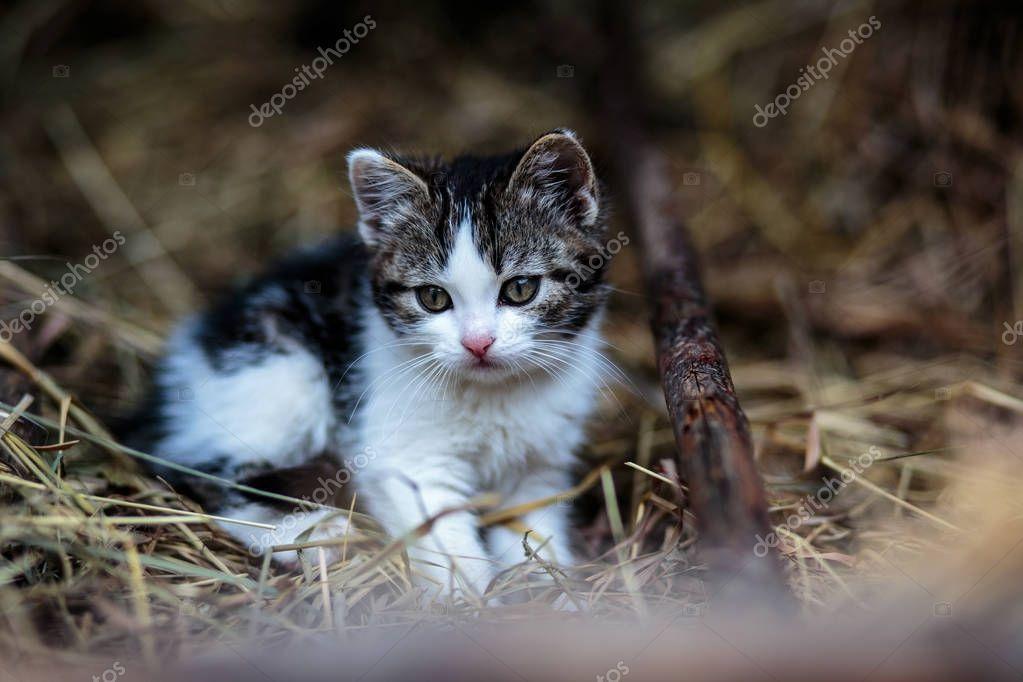 Beautiful little kitten playing outdoor