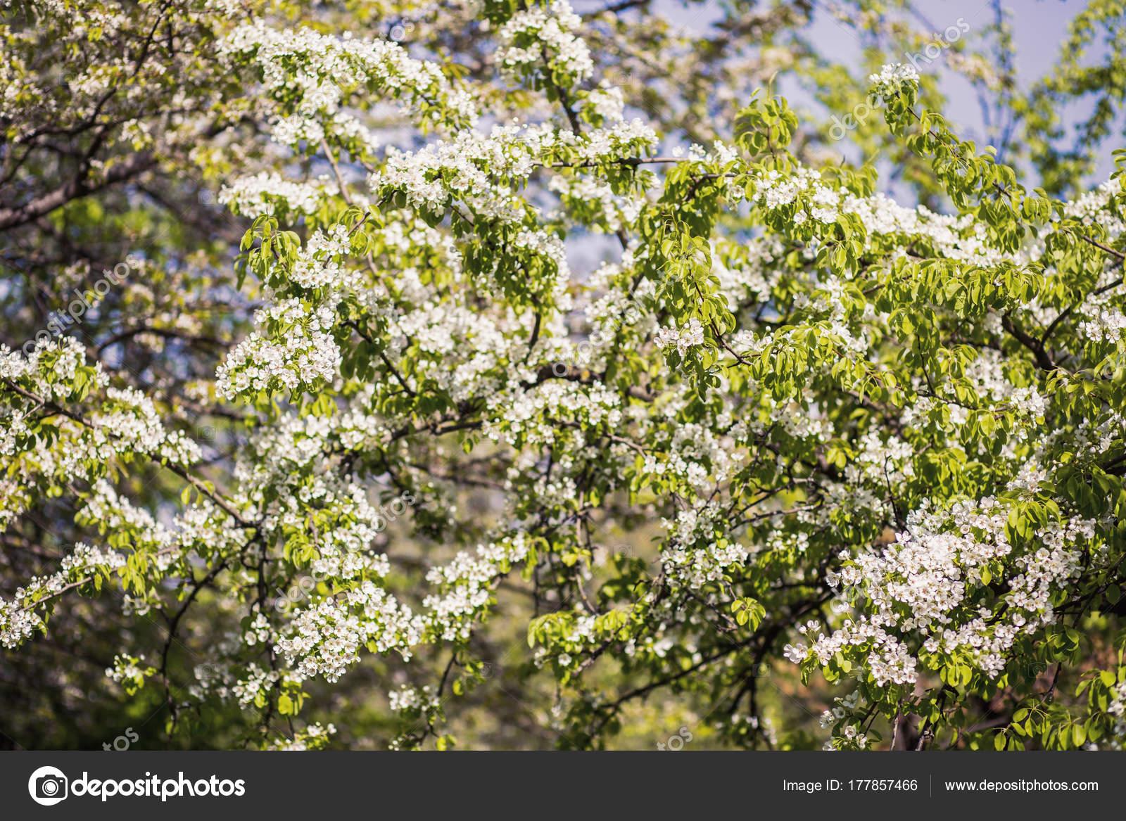 fond fleur printemps arbre fleur impression printemps branche arbre