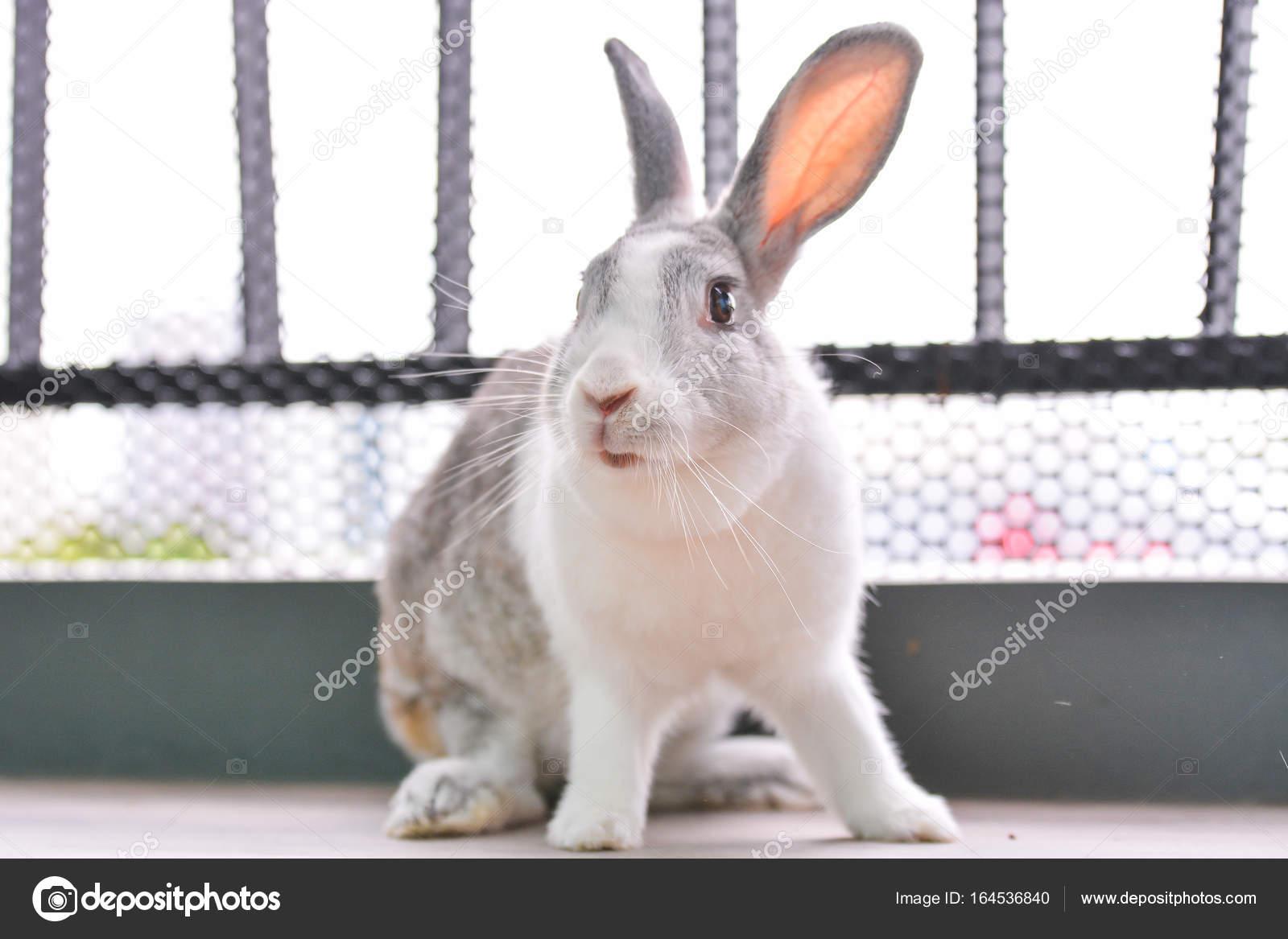 op zoek naar een konijn