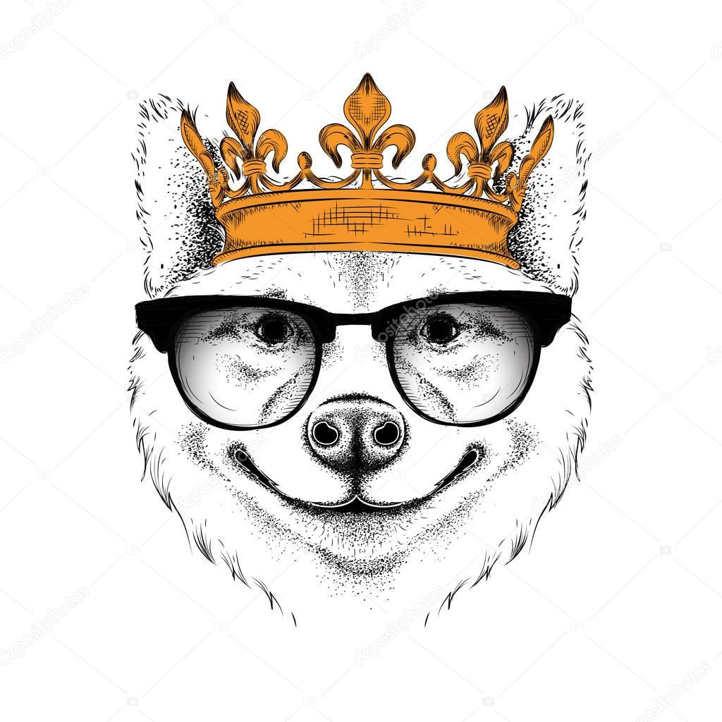 Hand draw Image Portrait of akita inu dog in the crown. Use for print, posters, t-shirts. Hand draw vector illustration