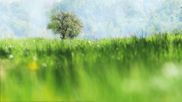 Osamělá jabloň na zelené louce