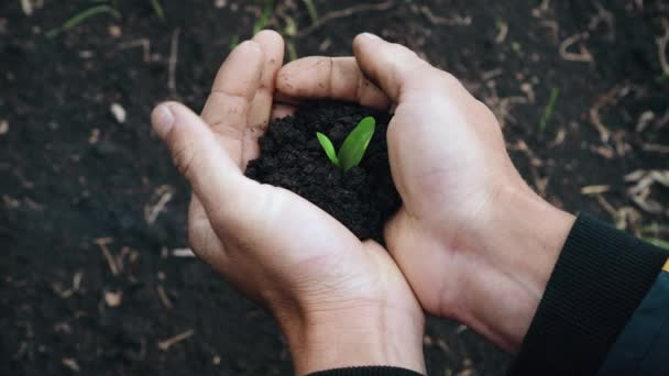 Man Holding a Little Green Plant